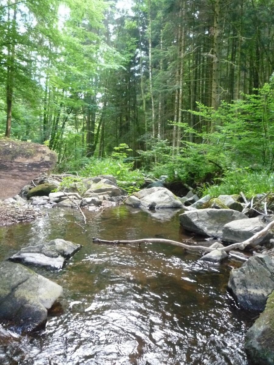 Bach-im-Wald