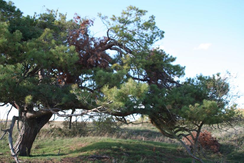 Baum-im-Wind