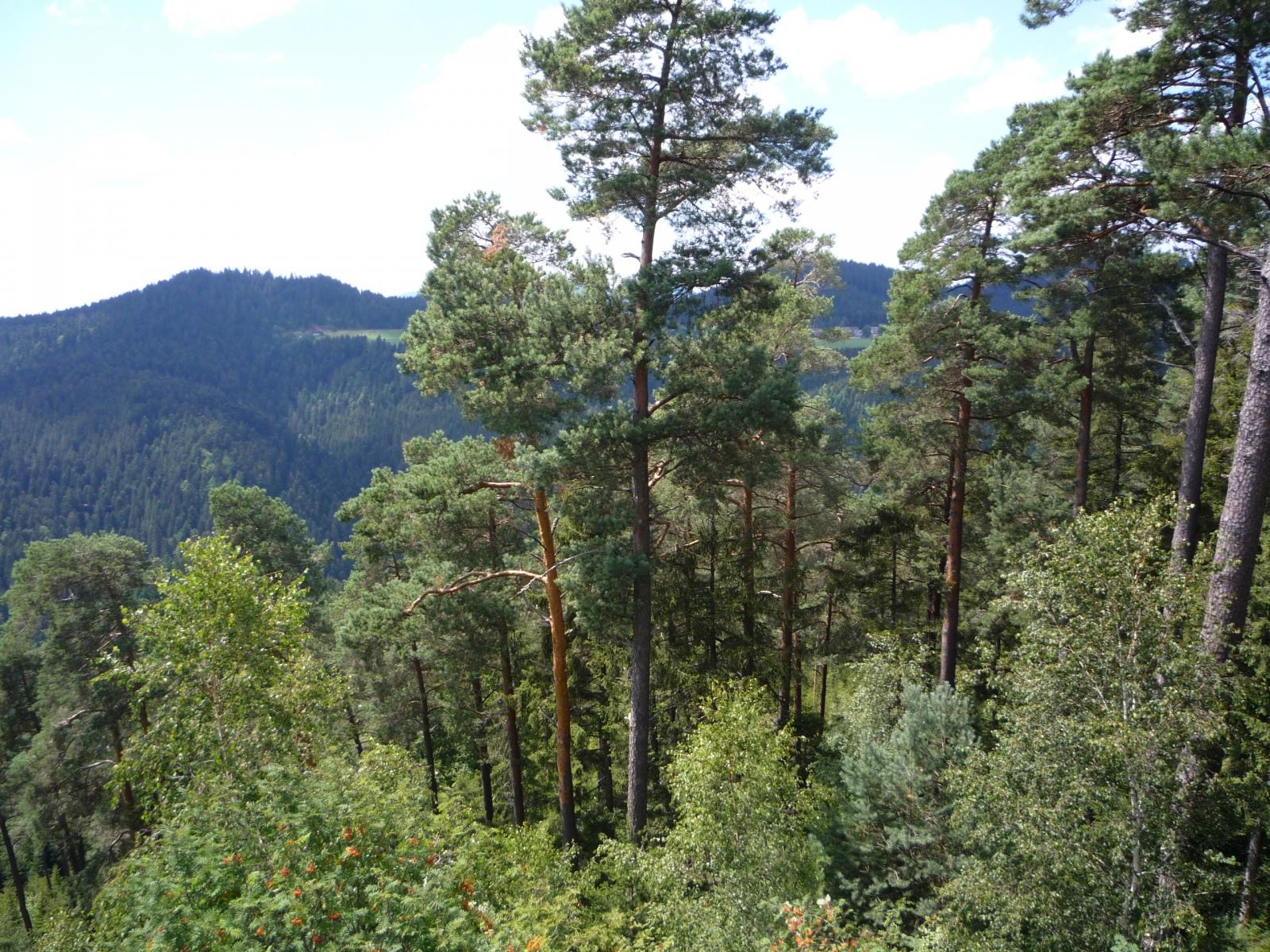 Berg-Wald