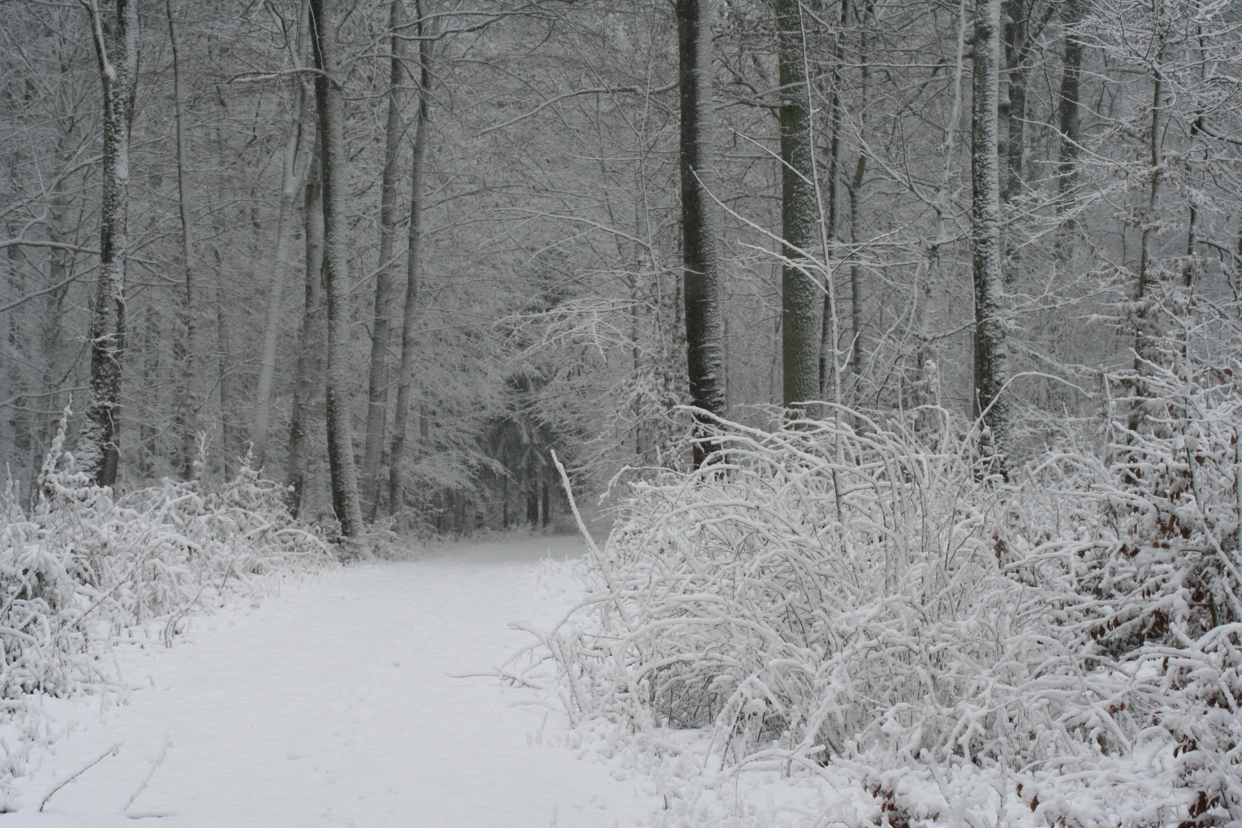 Schnee-Weg