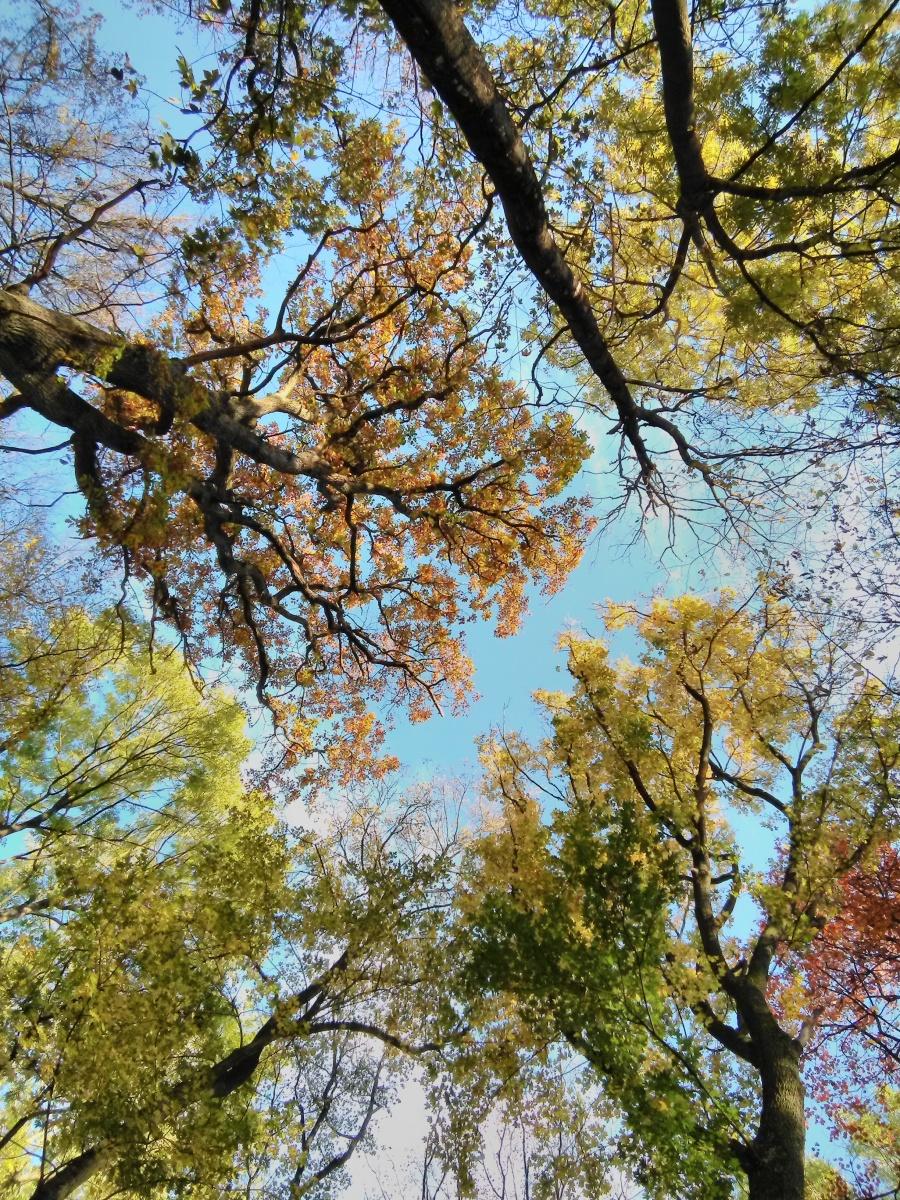 Bunte-Bäume