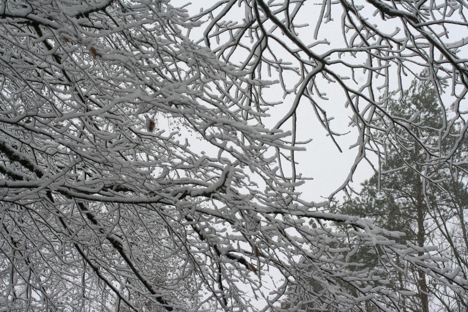 Schnee-Aeste