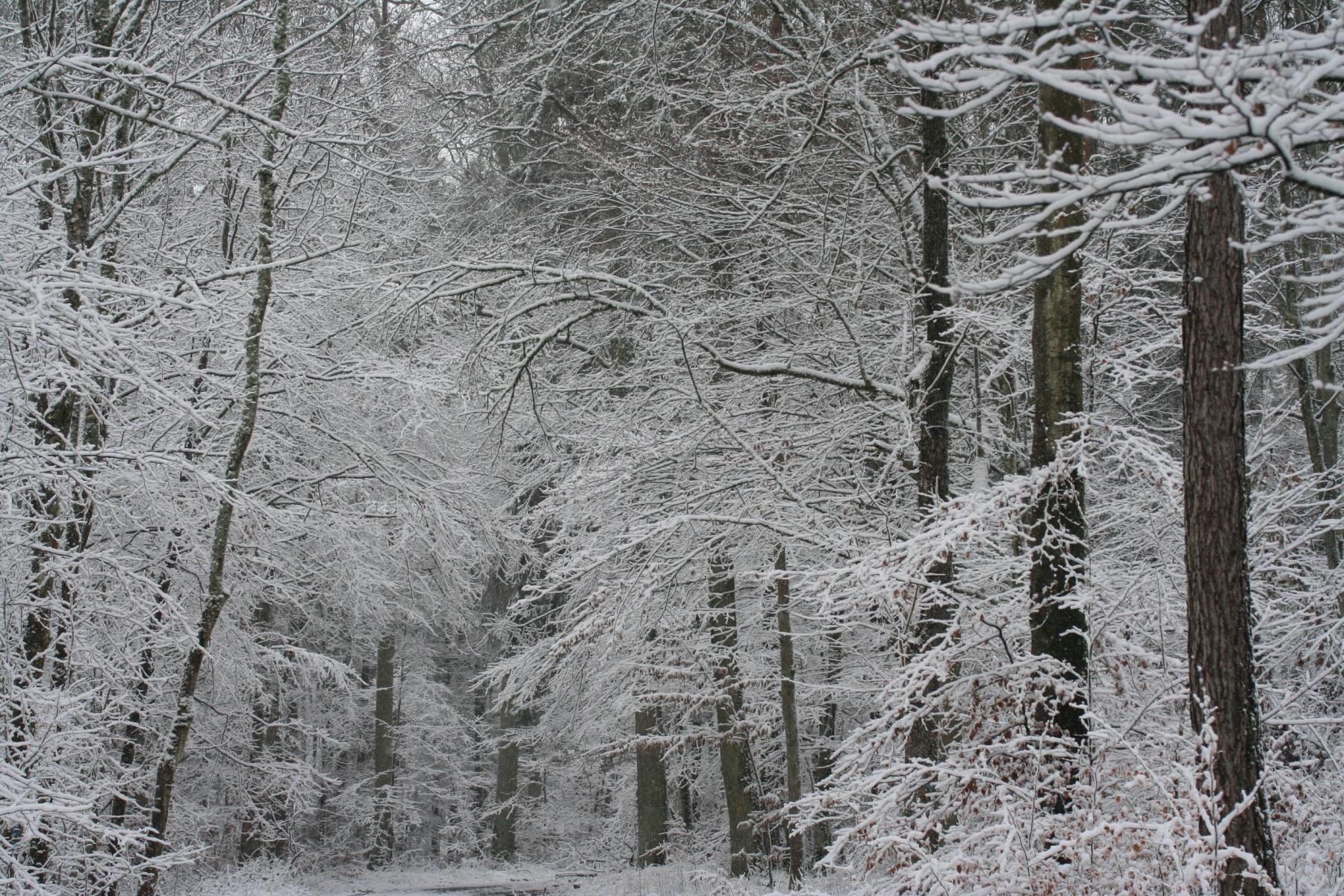 Schnee-Baeume